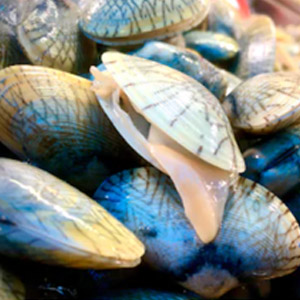 4-Shellfish